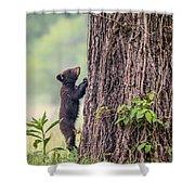 Little Bear Big Tree Shower Curtain