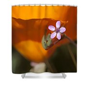 Little Beauty Shower Curtain
