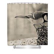 Little Bird Feeding Shower Curtain