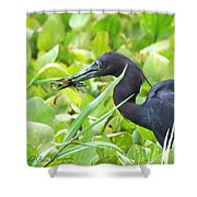 Little Blue Heron Catches A Frog Shower Curtain