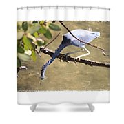 Little Blue Heron Going For Fish With Framing Shower Curtain