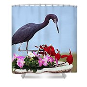 Little Blue Heron In Flower Pot Shower Curtain