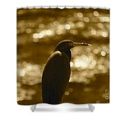 Little Blue Heron In Golden Light Shower Curtain