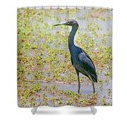 Little Blue Heron In Weeds Shower Curtain
