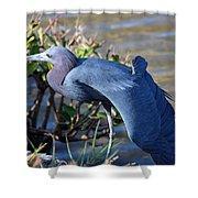 Little Blue Heron Sunbathing Shower Curtain