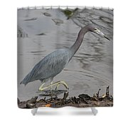 Little Blue Heron Walking Shower Curtain