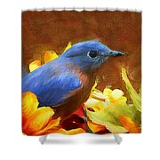 Little Boy Blue Shower Curtain
