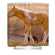 Little Brother Shower Curtain