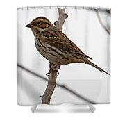 Little Bunting Shower Curtain