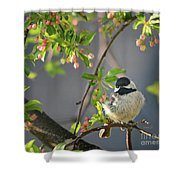 Little Chickadee In The Pink Shower Curtain