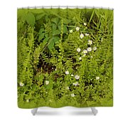 Little Daisy Shower Curtain