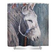 Little Donkey-glin Fair Shower Curtain