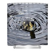 Little Duckling Goes For A Swim Shower Curtain