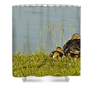 Little Duck's Moving Day Shower Curtain