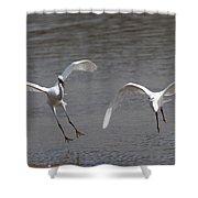 Little Egrets In Flight Shower Curtain