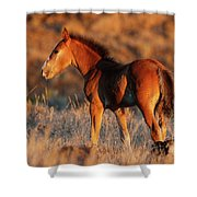 Little Filly Shower Curtain