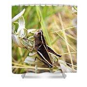 Little Grasshopper 2 Shower Curtain