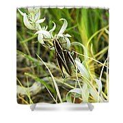 Little Grasshopper Shower Curtain