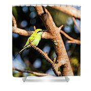 Little Green Bee Eater On A Branch Shower Curtain