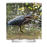 Little Green Heron With Fish Shower Curtain