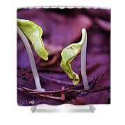 Little Green Sprouts  Shower Curtain