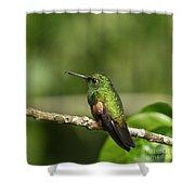 Little Hummingbird Shower Curtain