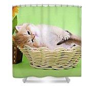 Little Kitten Shower Curtain