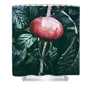 Little Lady Rosehip Shower Curtain