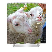 Little Lambs Eat Straw Not Ivy Shower Curtain