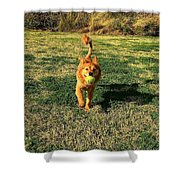 Little Lion Shower Curtain