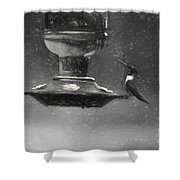 Little Male Hummingbird In Charcoal Shower Curtain