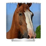Little Mare Shower Curtain
