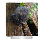 Little 'mighty Mouse' Shower Curtain