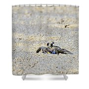 Little Nag's Head Crab Shower Curtain