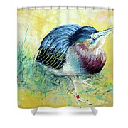 Little Night Heron Shower Curtain