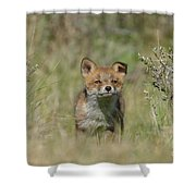 Little One Shower Curtain