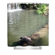 Little Otters At Jersey Zoo Shower Curtain