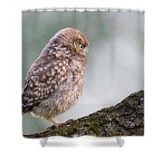 Little Owl Chick Practising Hunting Skills Shower Curtain