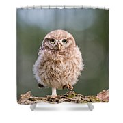 Little Owl Chick Shower Curtain