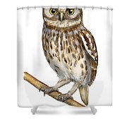 Little Owl Or Minerva's Owl Athene Noctua - Goddess Of Wisdom- Chouette Cheveche- Nationalpark Eifel Shower Curtain