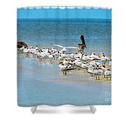 Little Pavilion Residents Shower Curtain