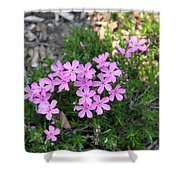 Little Pink Flowers Shower Curtain