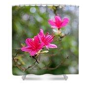Little Pink Shower Curtain