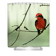 Little Red Beauty - Vermilion Flycatcher Shower Curtain