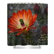 Little Red Claret Cup Flower  Shower Curtain