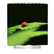 Little Red Ladybug On Green Leaf Shower Curtain by Christina Rollo