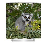 Little Ring-tailed Lemur Shower Curtain
