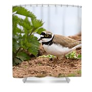 Little Ringed Plover Shower Curtain