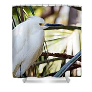 Little Snowy Egret Shower Curtain