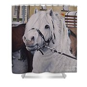 Little Stallion-glin Fair Shower Curtain